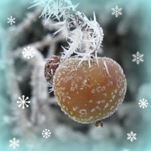 frost apple